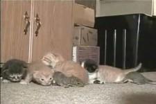 Katze adoptiert