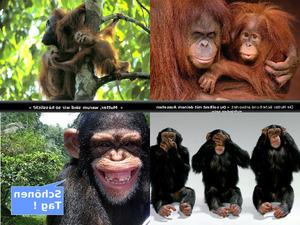 fragt das Affenkind seine Mama...