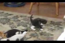 kleine verrückte Kätzchen