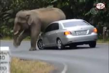 Chagrijnige olifant