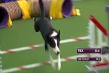 schnellster Hund am Parkour
