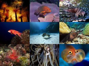Sagenhafte Bilder aus dem Meer!