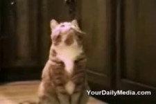 Katze spricht