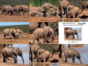 Baby Elefanten