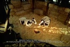 California Cheese commercial - happy cows - hit the snooze