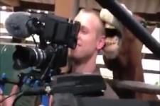 Pferd liebt Kameramann
