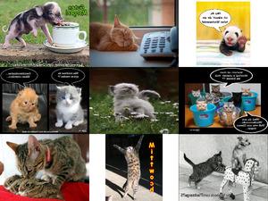 Tiere melden sich 9