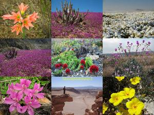 Chili - Atacama