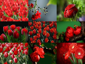 En Rojo in Red - Albanandy