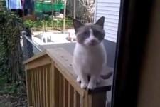 Yelling Cat WMV V9