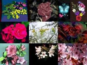 mes-amours-de-fleurs-roberte (Meine Liebe zu Blumen)