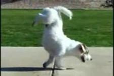 Welten coolster Hund