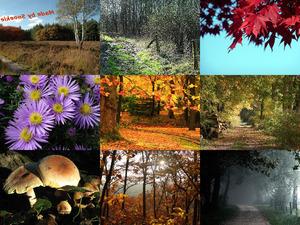 Herbst 1 - Sehr schöne Herbstaufnahmen
