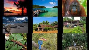 Borneo 2