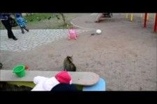 Achtung Katze