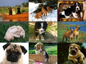 für Hundefreunde und solche, die es werden wollen...