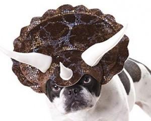 witziges Hundekostüm!