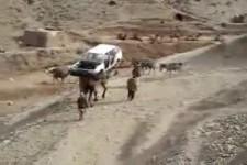 ein Kamel und