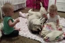 Zwillinge und ein Hund