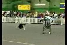 Ein Legionär und sein Hund