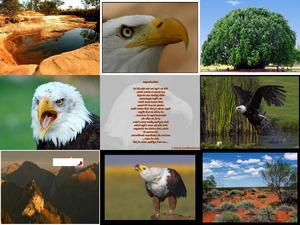 flying-eagles - Fliegende Adler