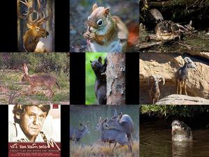 Bilder-Galerie vom 10032013 Tiere 1