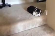 Treppen steigen ist schwer