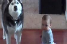 Wenn ein Hund ein Baby imitiert