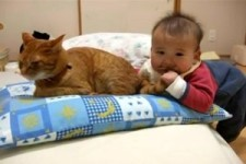 Katzenschwaenzchen
