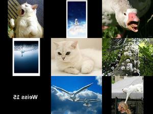 Weiss 15