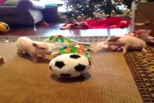 Baby-Schweine freuen sich