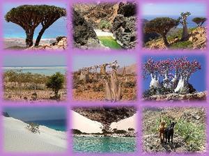 Socotra - eine wunderschoene Insel im Jemen - Aldo