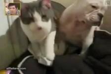 Katze schlägt Hund