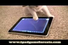 wie man eine Katze verrückt machen kann