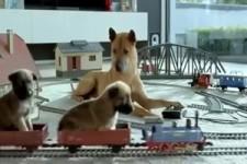 Die moderne Hundefamilie
