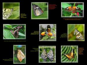 Schmetterlingsfotos mit besinnlichen Sprüchen