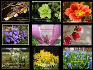 Frühlingsbilder und Sprüche