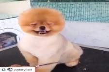 Hundefriseur