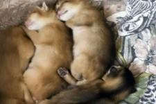 Katzen Bilder als Video
