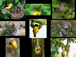 Bird nests-music A bird came flying- Harp instrument jean
