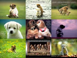 Hunde und Menschen