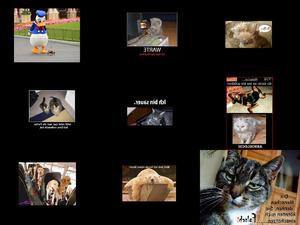 Tierfotos zum Schmunzeln
