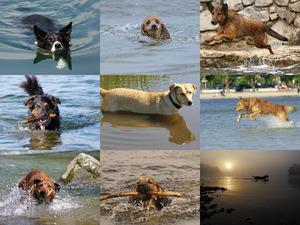 Wasserspaß mit Hunden