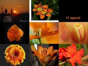Orange 77