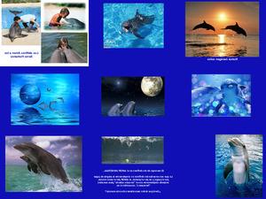 schöne Bilder von Delfinen