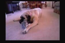 Braver Hund - oder doch nicht