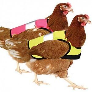 Warnweste für Hühner!