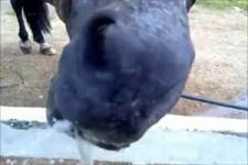 Pferd und Wasser