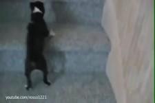 Süsse Hundebabys lernen Treppen steigen