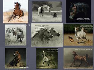 CABALLOS que belleza - wunderbare Pferde